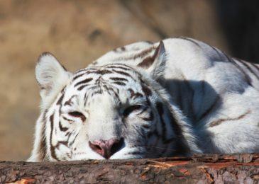 Как стать опекуном животных в Московском зоопарке