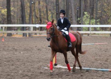Куда отвести ребенка на занятие конным спортом: все КСК Москвы и области