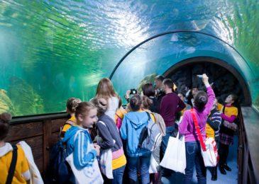 Какой океанариум в Москве самый лучший: какие рыбы и морские животные есть в каждом, сколько стоят билеты